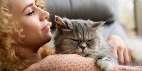 Почему и как кошки мурлыкают