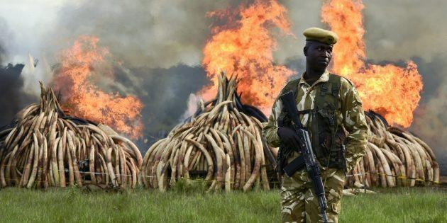 Документальные фильмы про природу: «Игра цвета слоновой кости»