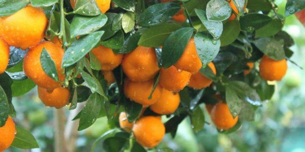 Куда сходить в Саратове: лимонарий