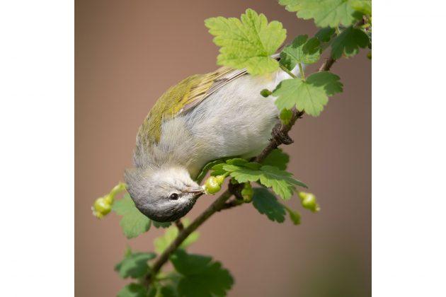 Лучшие фото птиц с конкурса National Audubon Society