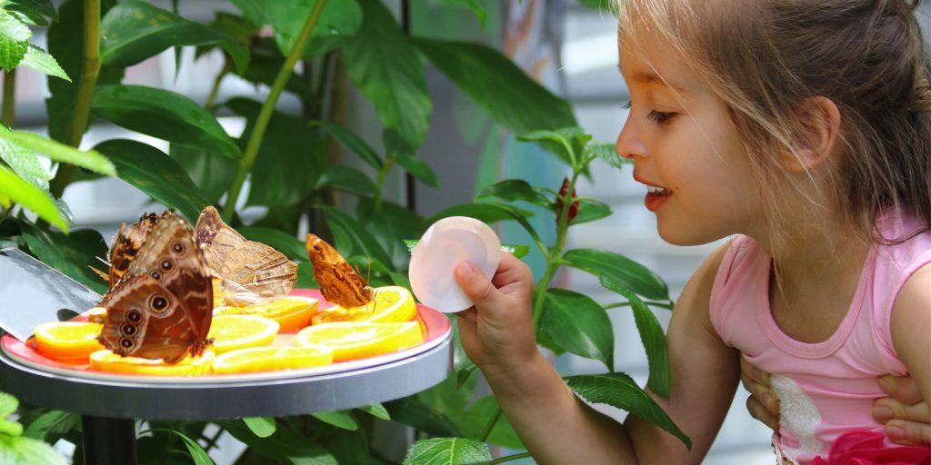 Достопримечательности Владивостока: дом бабочек «Восторг»