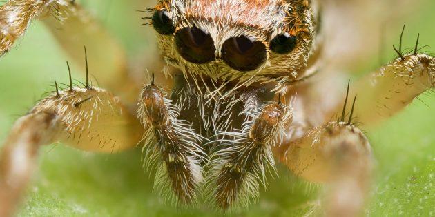 Пауки, скорпионы и многоножки — насекомые