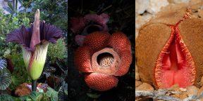 10 самых странных и необычных растений со всего мира