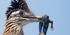 «Сейчас вылетит птичка»: 10 лучших фотографий с конкурса National Audubon Society