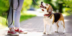 8 вещей, которые стоит делать регулярно, если у вас есть собака