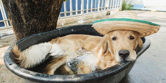5 советов тем, кто плохо переносит жару