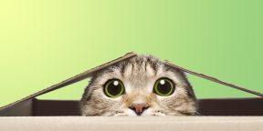 Проверка на внимательность: сколько котиков на картинке? Найдите всех!