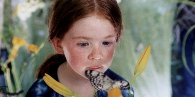 Фильмы о природе: «Бабочка»
