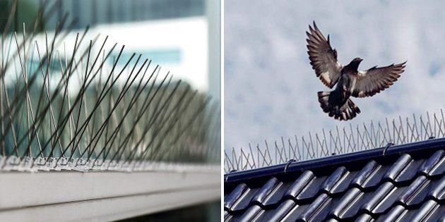 полезные вещи с алиэкспресс: отпугиватель птиц