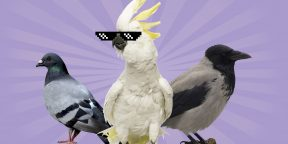 5 самых умных птиц, по мнению учёных