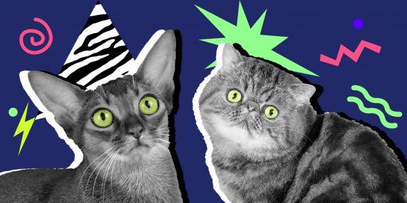 ТЕСТ: Сиамские, тайские или британские? Определите породу котиков по фото!