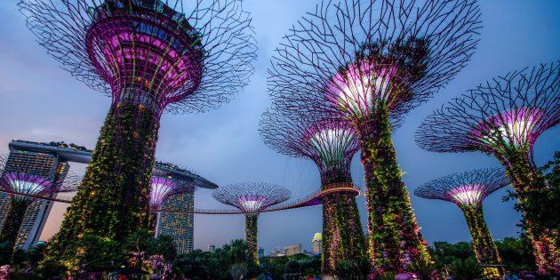 необычная современная архитектура: «Сады у Залива»
