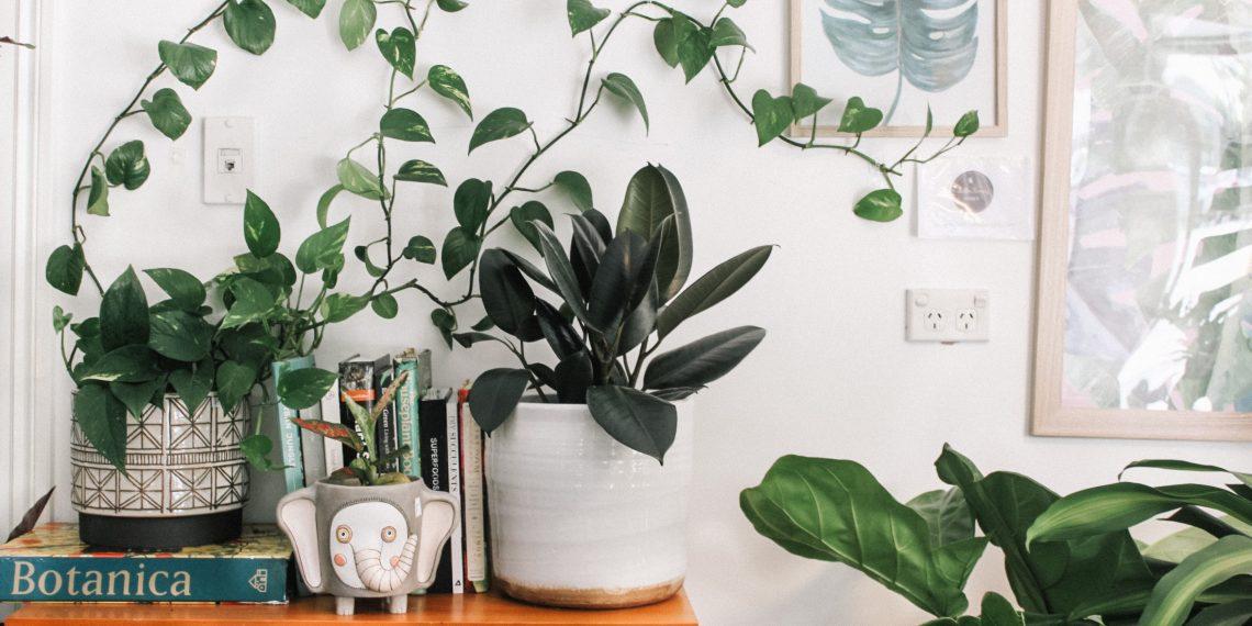 Тред: как ухаживать за растениями
