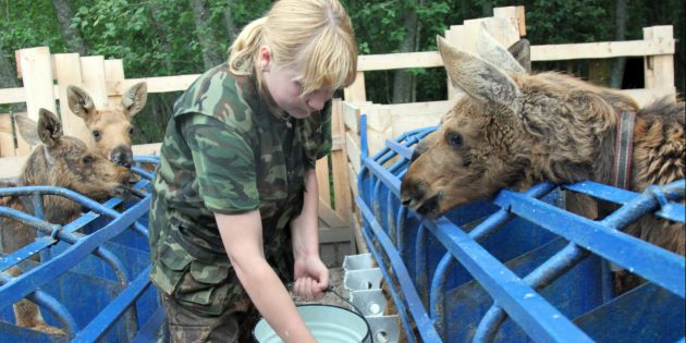 Достопримечательности Костромы: сумароковская лосиная ферма