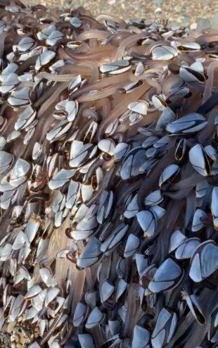 Британцы нашли удивительных существ на пляже