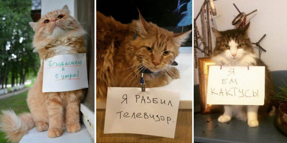 В Сети тред, где котики признаются в преступлениях