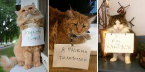 В Сети появился тред, где котики признаются в своих преступлениях
