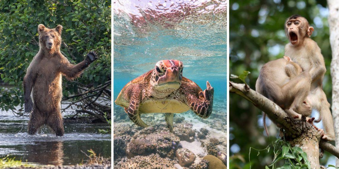 20 снимков с премии Комедийных фото дикой природы