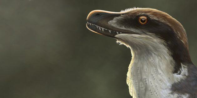 Заблуждения о динозаврах: динозавры не были покрыты серо-зелёной чешуёй