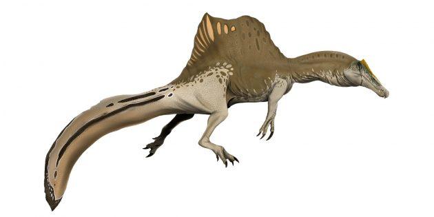 Современная реконструкция спинозавра