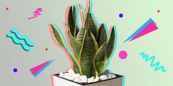 ТЕСТ: Это юкка или драцена? Проверьте, знаете ли вы названия комнатных растений!