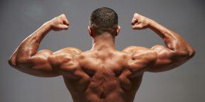 Как накачать трапецию для мощной спины и хорошей осанки