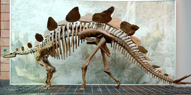 Мифы о динозаврах: у них не было по два мозга