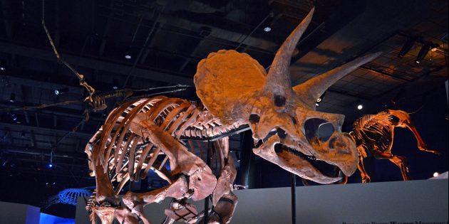 Мифы о динозаврах: они не вымерли моментально