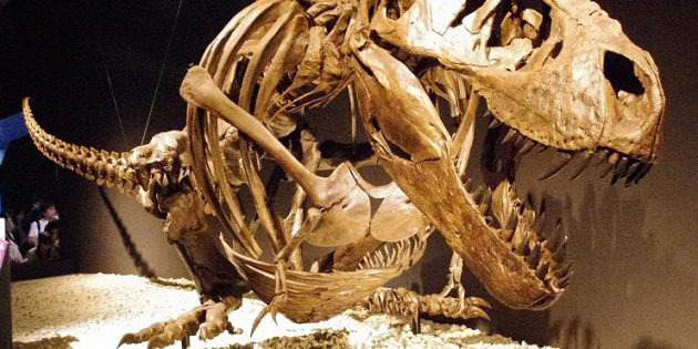 Лапы тираннозавра были достаточно мощными и функциональными