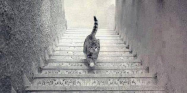 Кот, гуляющий по лестнице