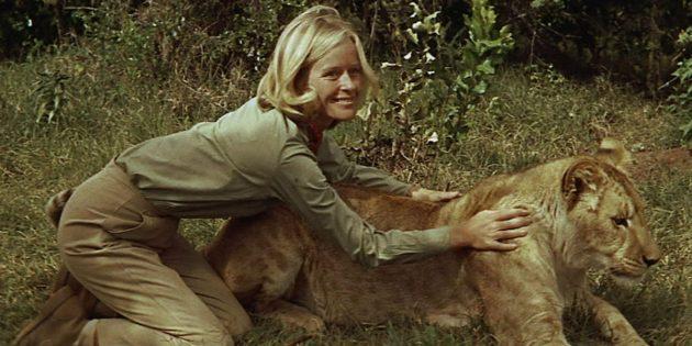 Кадр из фильма про львов «Рождённая свободной»