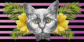 Тест на зоркость: какой котик отличается от остальных?