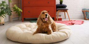 13 способов сделать комфортную лежанку для собаки своими руками