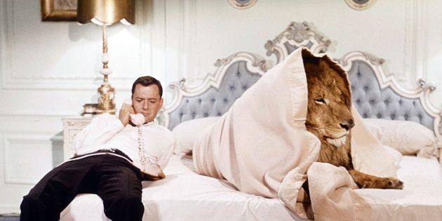 Фильмы про львов: «Пушистый»