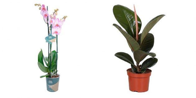 Подарки дедушке на Новый год: Комнатное растение