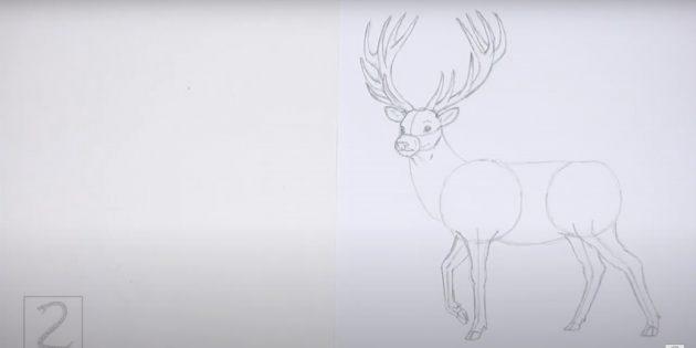 Как нарисовать оленя: детализируйте задние ноги