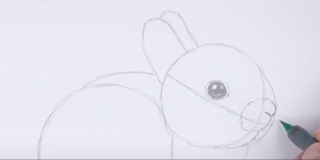 Как нарисовать кролика: детализируйте мордочку