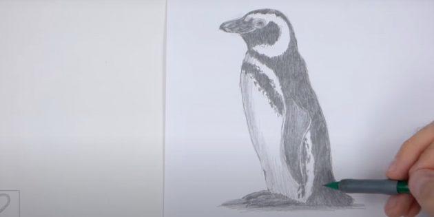 Как рисовать пингвина: добавьте тени