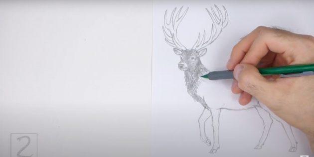 Как рисовать оленя: начните закрашивать оленя