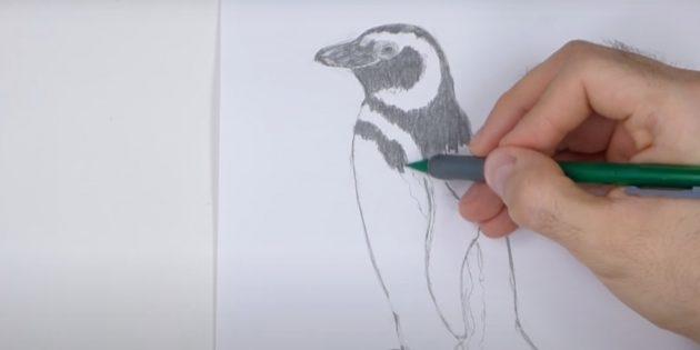 Как рисовать пингвина: обозначьте полоски