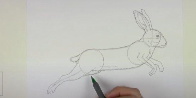 Как рисовать зайца: прорисуйте вторую переднюю лапу