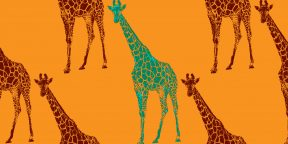 Проверка на внимательность: сколько жирафов на картинке? Посчитайте!