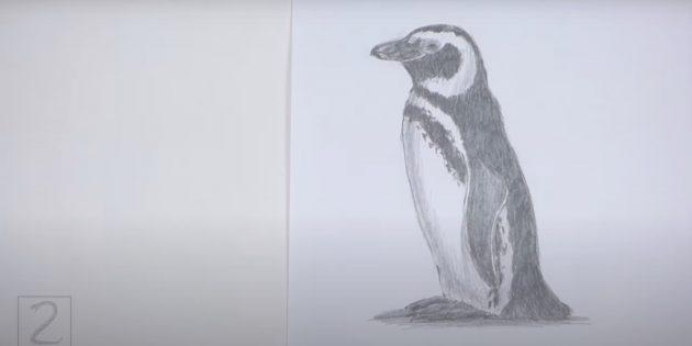 Как нарисовать реалистичного стоящего пингвина