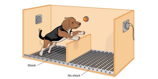 выученная беспомощность: эксперимент с собаками
