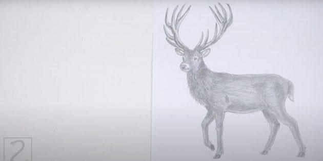 Как нарисовать реалистичного стоящего оленя