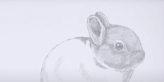 Как нарисовать кролика: заштрихуйте голову