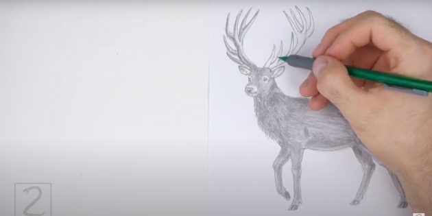 Как рисовать оленя: закрасьте рога
