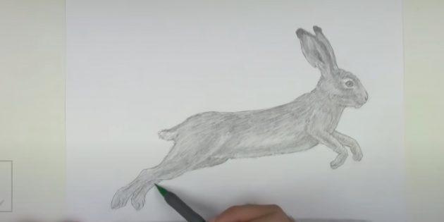 Как рисовать зайца: закрасьте тело