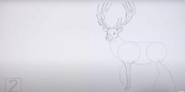 Как нарисовать оленя: детализируйте прямую переднюю ногу