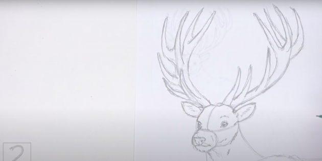 Как нарисовать оленя: прорисуйте ответвления на рогах